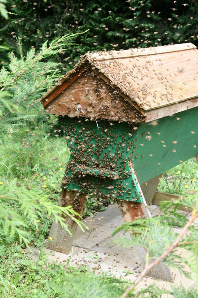 Save The Bees! Build A Top Bar Bee Hive! (Instructions Included) - Exposing The Truth
