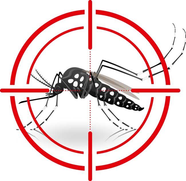 Surto provocado pelo mosquito Aedes aegypti mobiliza metodistas