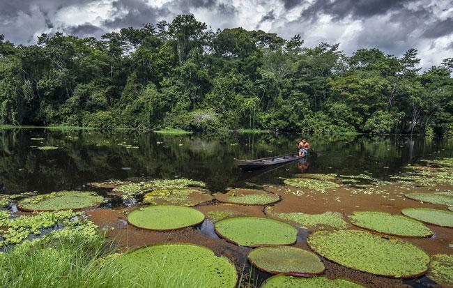 Meio Ambiente: uma reflexão sobre a Amazônia