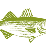 Never to early to plan for opening day of rockfish season at the Boatyard Bar & Grill