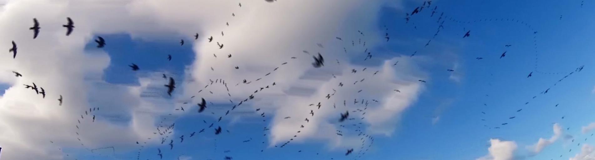 Seagull Skytrails