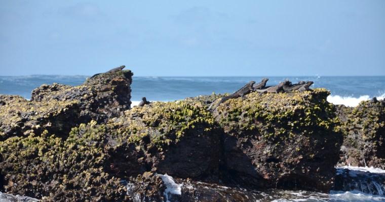Galápagos, Una Historia De Amor. [Parte 1. Santa Cruz]