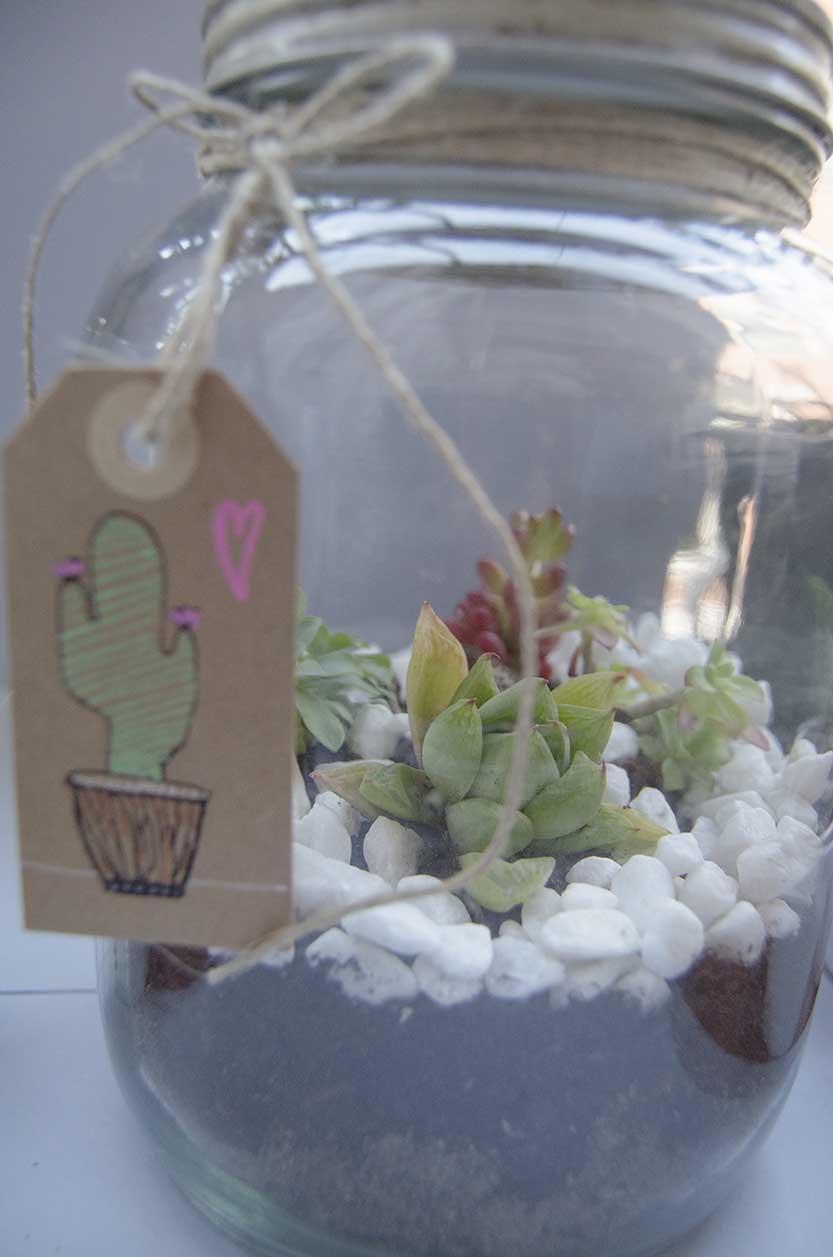 terrario cactus (5)