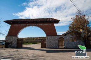Institutul de Pomicultura Pitesti Maracineni