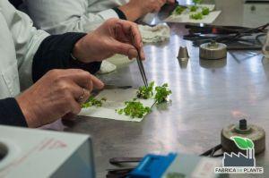 Laborator de microinmultire a plantelor