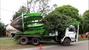 Transplantare, relocare arbori ornamentali