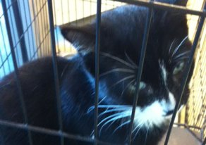 Fab-Finds-Featured-Story-flagler-humane-society-black-cat