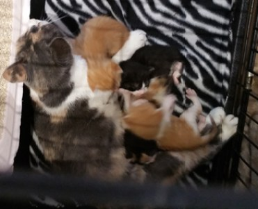 fab-finds-flagler-cats-momma