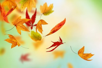 Autumn-Fall-Leaves-HD