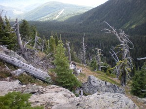 Amazing Trees at top of Mt Plwman