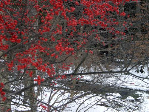 Happy Winter Solstice - Pocono Springs, Newfoundland PA
