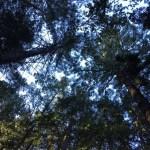 Muir Woods Dipsea Trail