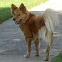 Fannie: the 3-Legged Dog