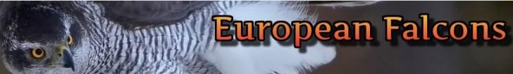 europeanfalcons_banner
