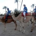 La palmeraie de Marrakech au crépuscule