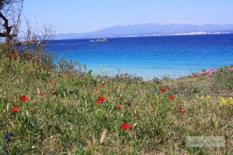Verboten blaues Meer, sanfte Hügel und Blumenwiesen: Sardinien (hier an der Nordküste).