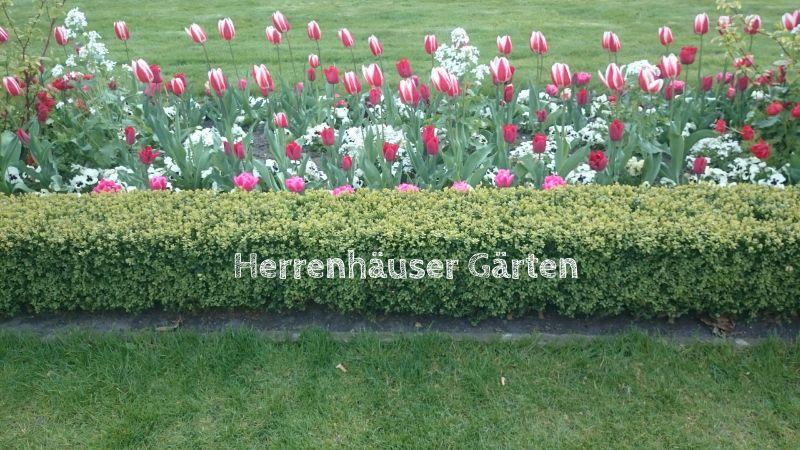 Hannover: Ausflug in die Herrenhäuser Gärten