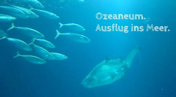 Ozeaneum. Ausflug ins Meer.