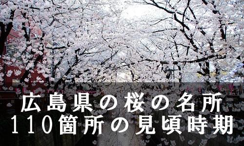 sakura-12-6693