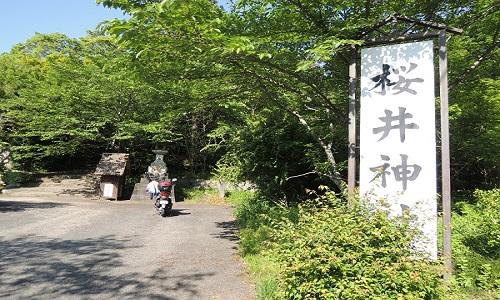 sakurai-12219-1