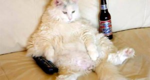gato-sofa