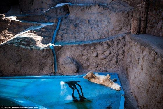 صورة رقم 7 - صور تعبر عن حياة حزينة وبائسة للحيوانات وراء القضبان!