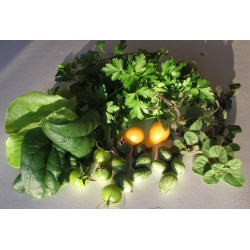 Small Crop Of How To Harvest Parsley