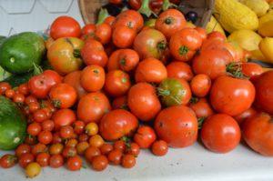 Garden-fresh tomatoes