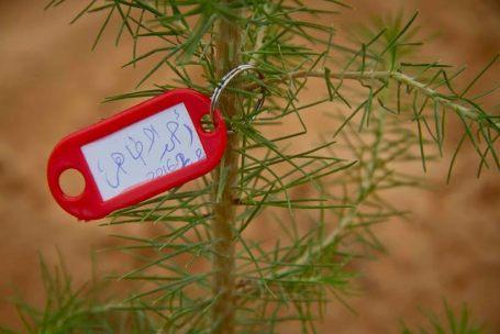 أغرسها وحط أسمك عليها شعار لحملة غرس الأشجار في بلدية صبراتة