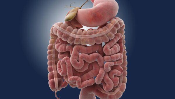 Qual é o caminho que os alimentos fazem dentro de nosso organismo? Qual é o caminho que os alimentos fazem dentro de nosso organismo? 4 64
