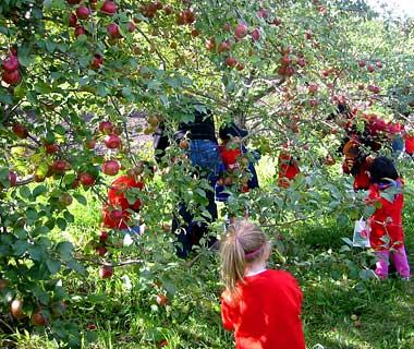 200909-w-apples-deardorff