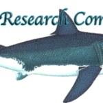Large Shark Sighting at Bolsa Chica State Beach