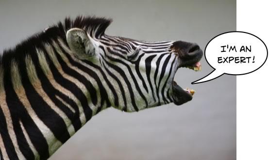 zebra-social-media-expert