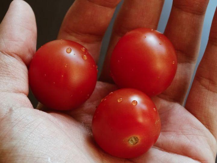 federconsumatori sicilia disegno di legge 533 agricoltura