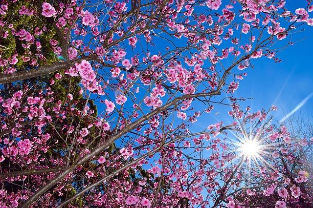 blossoming femininity