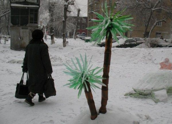 Hilarious-Russian-Photos-Palm-Trees