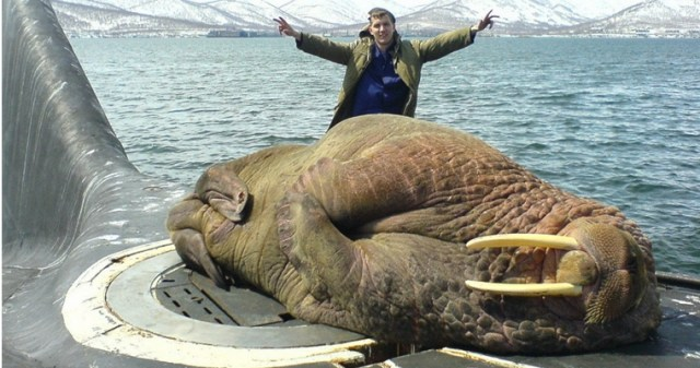 Hilarious-Russian-Photos-Walrus