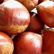 Chestnut Stuffing – Easy Thanksgiving Recipes