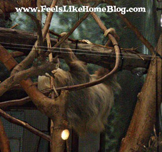 Sloth at the zoo