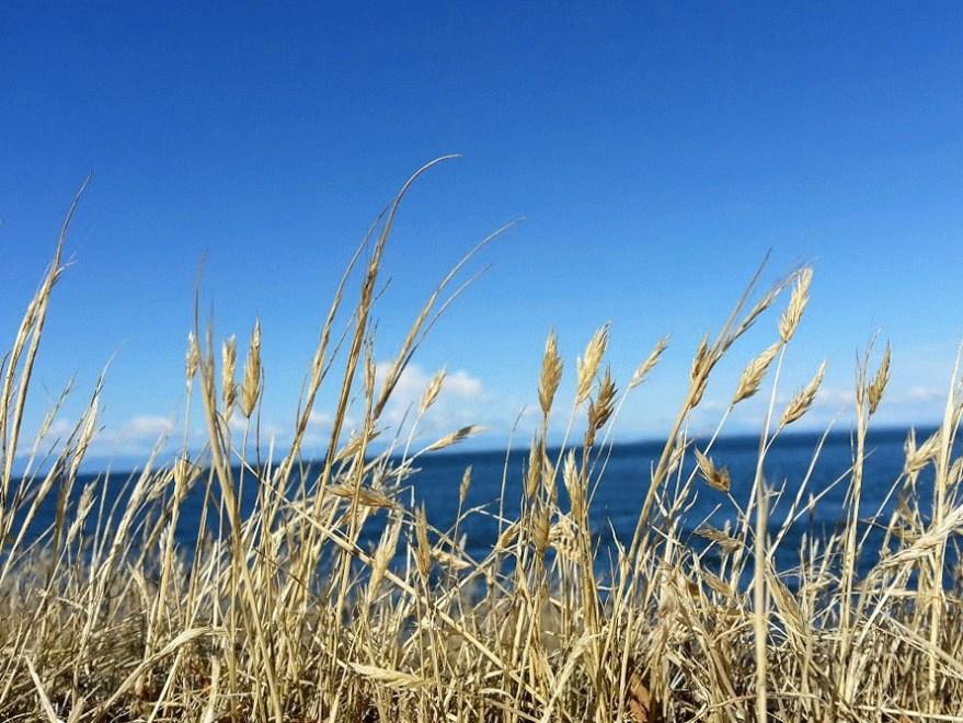 grass_wind