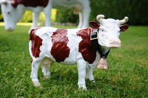 Petite vache avec sa cloche