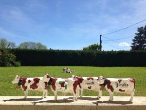 Petite vache en troupeau coloré !