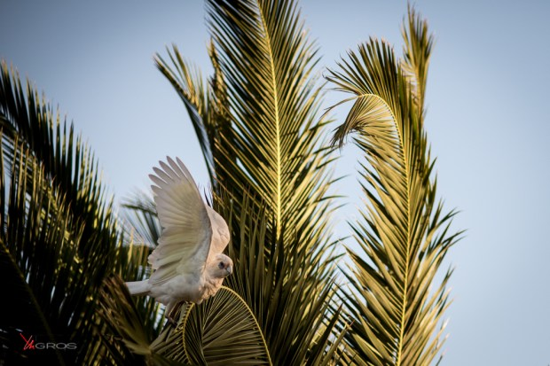 Bird In The Palms