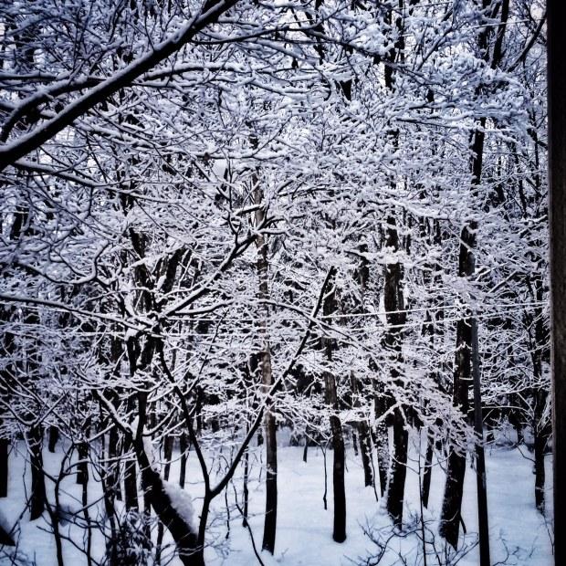 Hakuba Tree Snapshot 1