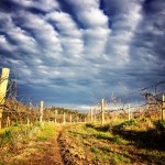 Clare Valley Vineyards