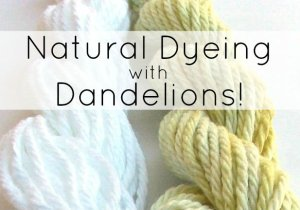 Natural Dyeing with Dandelions