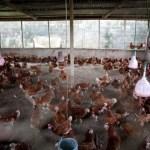 Portes ouvertes: la SMAG,  leader  dans  la production de la  farine au Gabon