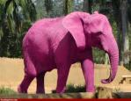 Côte d'ivoire elephant