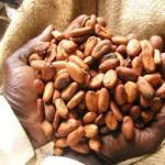 Ghana: Le prix de la tonne du cacao fixé à 1609 euros