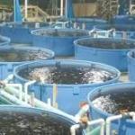 Cameroun : La FAO débloque plus de 400 000 dollars pour soutenir l'aquaculture